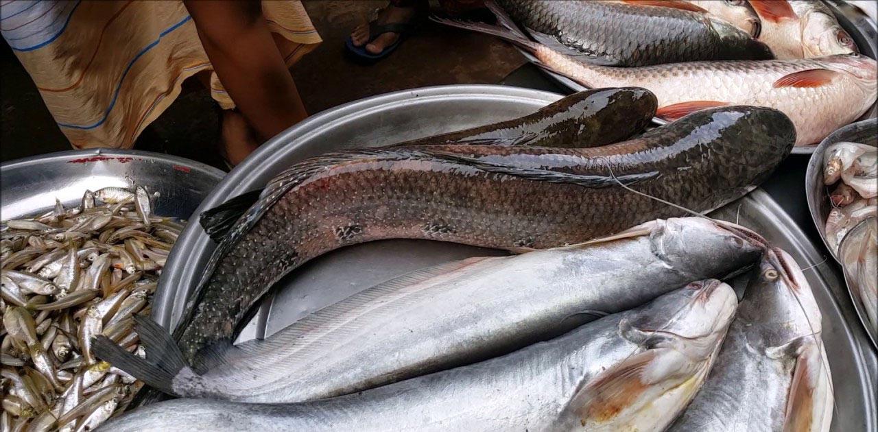 मछली खाते हैं तो जान लें ये इसके ये भयंकर नुकसान और फायदे, सभी नहीं जानते